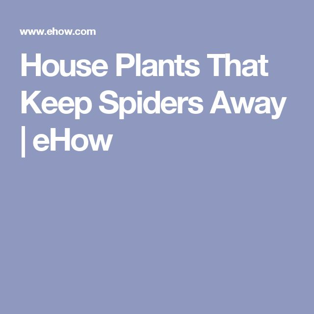 House Plants That Keep Spiders Away | eHow