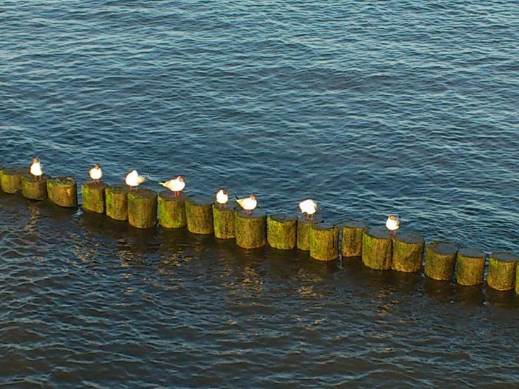 Usedom Insel, Koserow, 2012