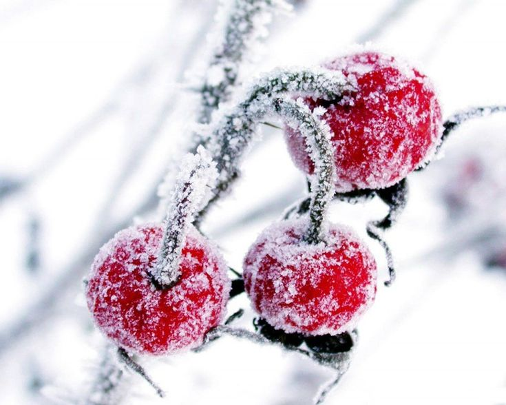 frosted winter fruits