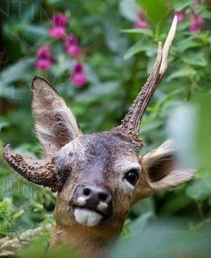 Mejores 11 imágenes de Deer. en Pinterest | Venado, Cacería de ...
