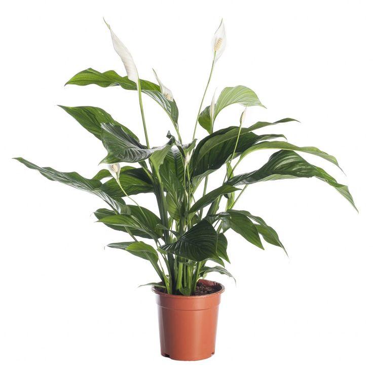25 beste ideen over Kamerplanten op Pinterest