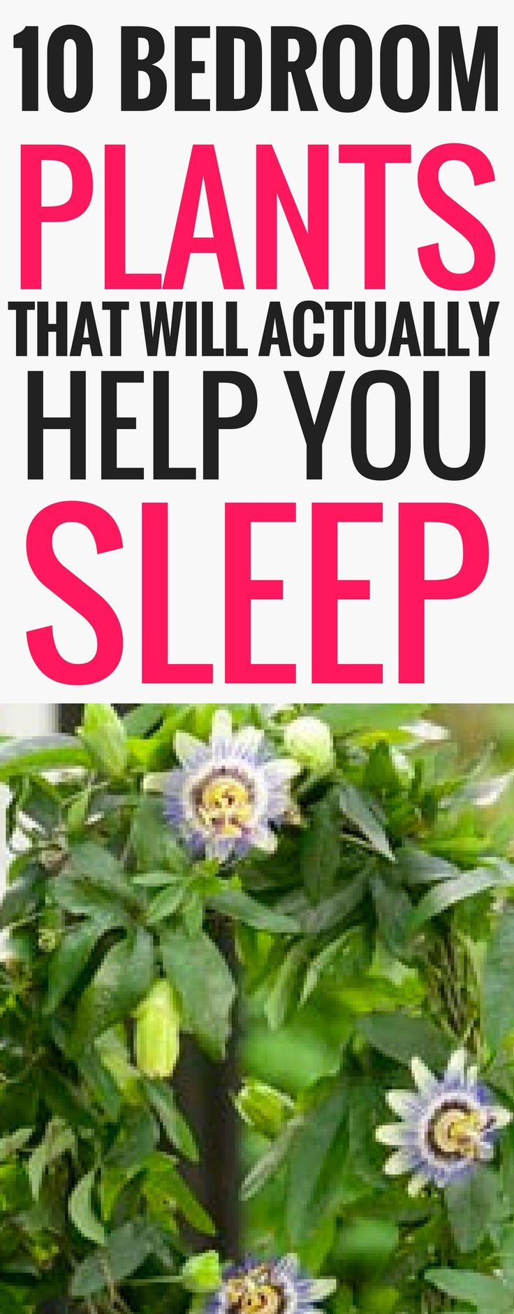 Insomnia is something I've struggled with my whole life- these are some of the BEST plants to help you sleep well at night! Get relief from insomnia by using these bedroom plants. (saving for later)