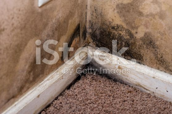 home interior black mold on basement wall royalty free