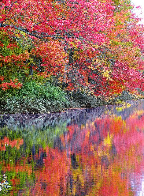 Awesome Autumn colors! - Stunning!: Autumn Reflection, Autumn Leaves, Beautiful Colors, Fall Colors, Impressionist Painting, Autumn Colors, Nature S, Fall Reflection