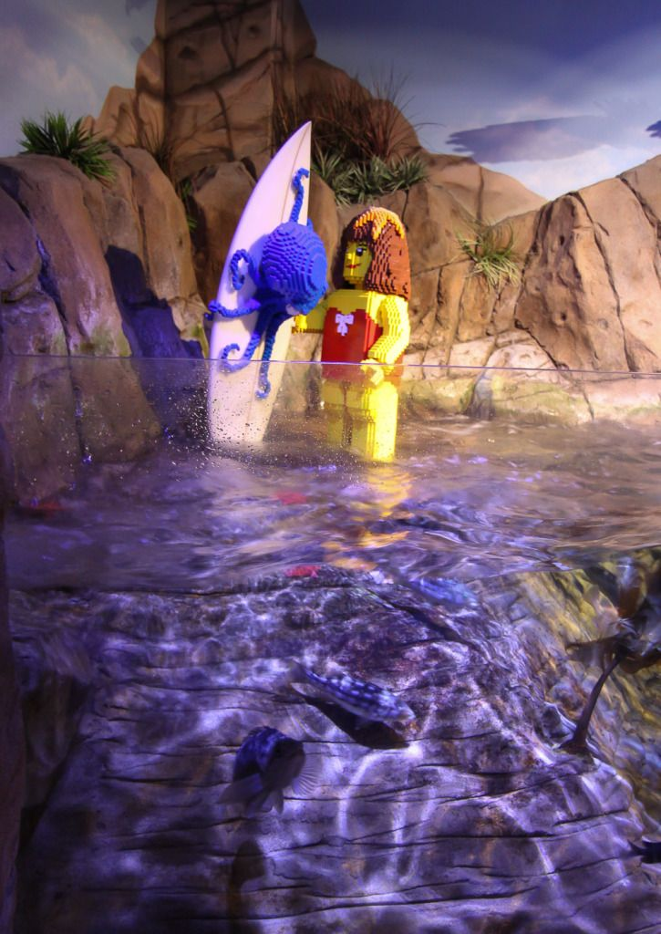 Take the Quiz Trail Through SEA LIFE Aquarium