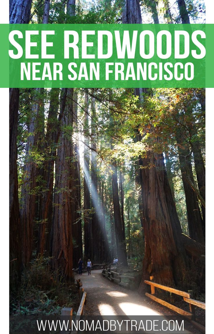 Experience the magnificence of redwood trees just minutes from San Francisco, California in Muir Woods National Monument. #California | #SanFrancisco | #NationalParks | #Redwoods | #UnitedStates | #MuirWoods