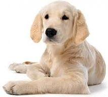 17 meilleures id es propos de urine de chien sur