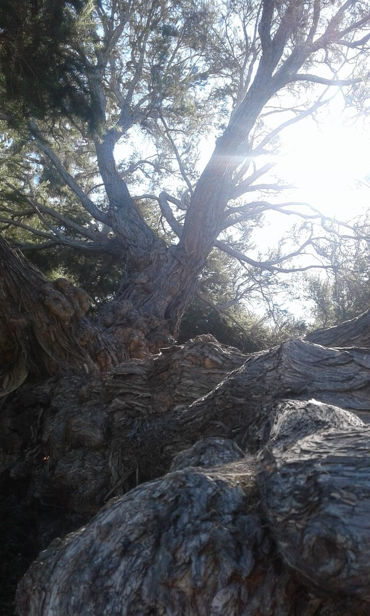 A gnarled past and a bright future. Tree on college grounds.[OC] [2560x1536][Santa Barbara Ca]