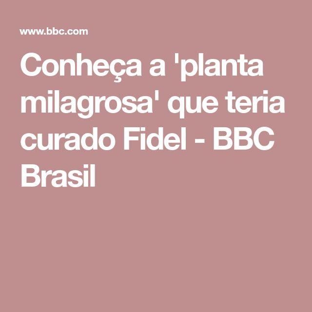 Conheça a 'planta milagrosa' que teria curado Fidel - BBC Brasil