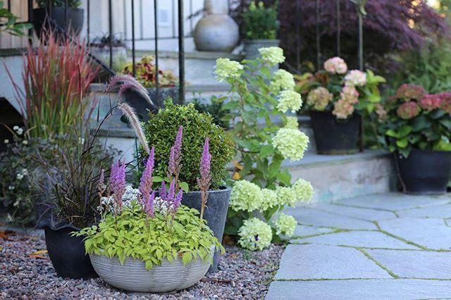 Var hälsad du vackra septembermorgon och godmorgon till dig! 🌼  #mitt60talshus #flowerpot #flowers #trädgård #garden #trädgårdsinspiration