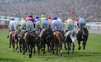 Horse Trainer Directory : Get Ready for Cheltenham Festival 2017 Action