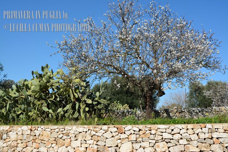 Spring in Valle d'Itria Follow me https://www.facebook.com/LucillaCumanPhotography