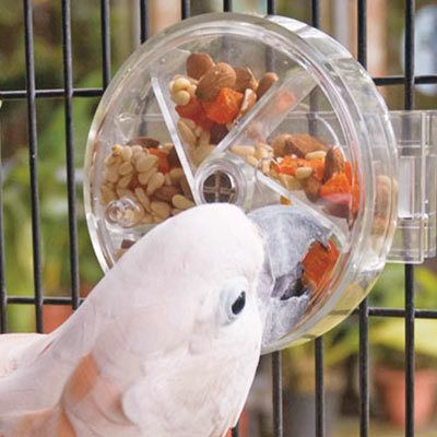 Reinforcement Foraging Wheel by Creative Foraging Bird Toy  The wheel is a favorite with highly active parrots especially Amazons, Caiques, Cockatoos and Macaws as well as the very clever parrots i.e. African Greys, in fact it seems to be enthusiastically enjoyed by most parrots.