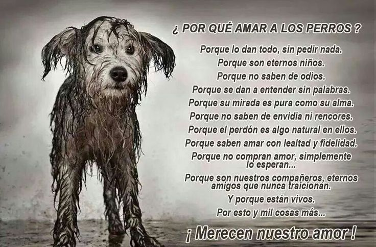Amar a los perros