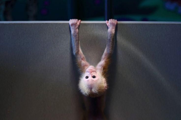 Bild zu Affenbaby Zoo Hangzhou China