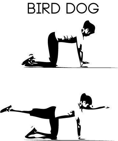 bird-dog-exercise-stretch