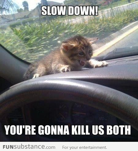 Slow down, kitten car ride