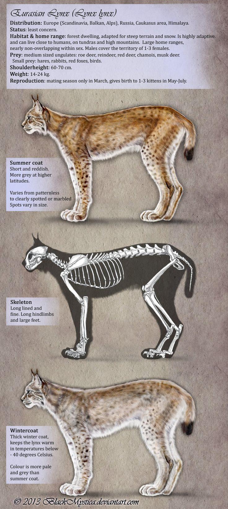 Appearance of the Eurasian Lynx by BlackMysticA.deviantart.com on @DeviantArt