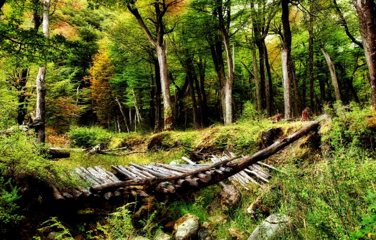 The Broken Bridge: Woodland Photography, Photography Tips, Trees Forests, Photos Daily, Hdr Photography, Forests Bridges
