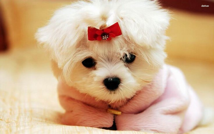 Cute Puppy Wallpaper