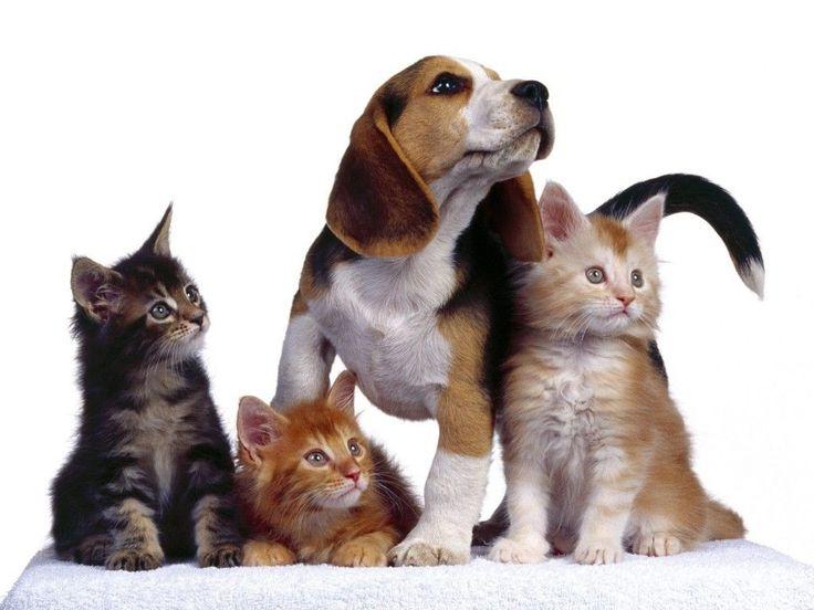 Datos curiosos sobre el gato y su comida: