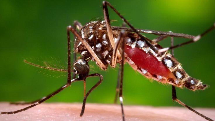 Cómo Prevenir El Contagio del Dengue, Sintomas del Dengue, Dengue, Como evitar la picadura de mosquito del dengue
