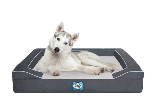 Sealy Dog Bed With Quad Layer Technology Large Modern Gray