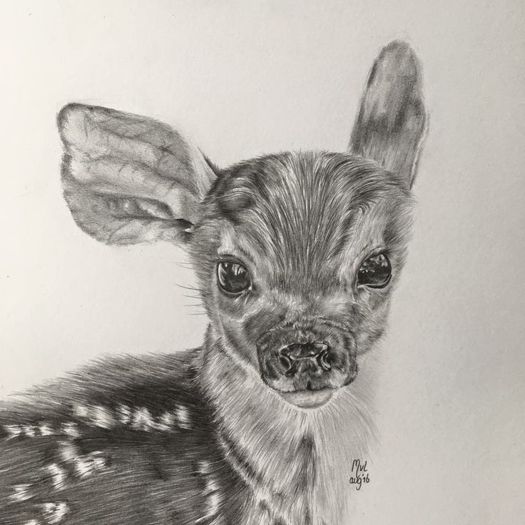 Drawing graphite Bambi deer   • mariellevanleeuwen@live.nl • AR•T•INT • www.facebook.com/artintx • instagram @artint