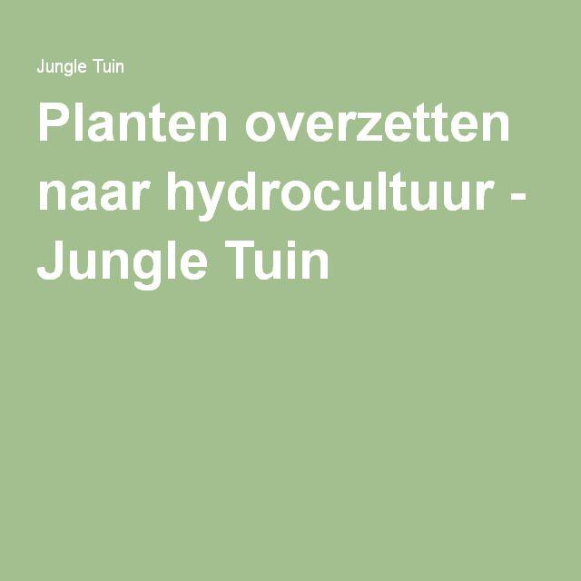 Planten overzetten naar hydrocultuur - Jungle Tuin