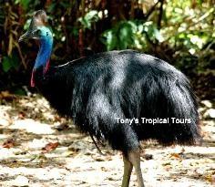 Tony's Tropical Tours