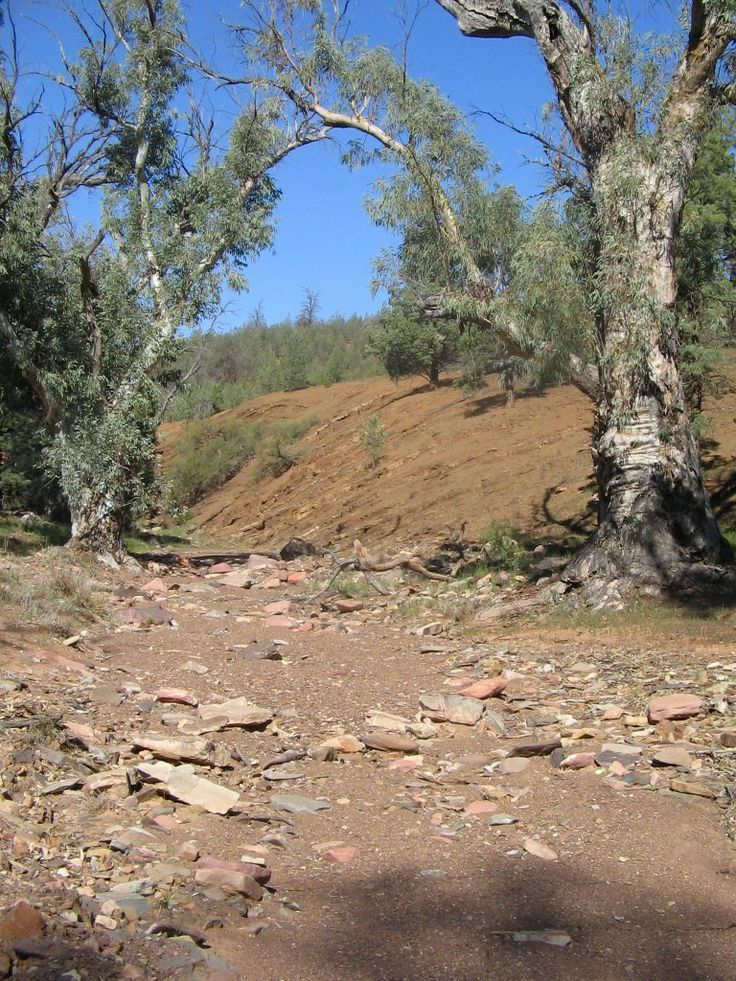 this is in the Flinders Ranger in South Australia - the river bank