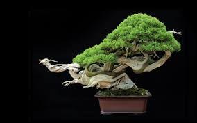 Bonsai trees. - Google Search