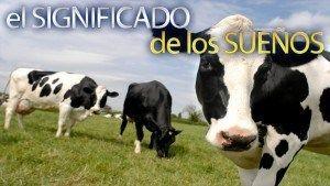 Soñar con vacas gordas  interpretación de los sueños