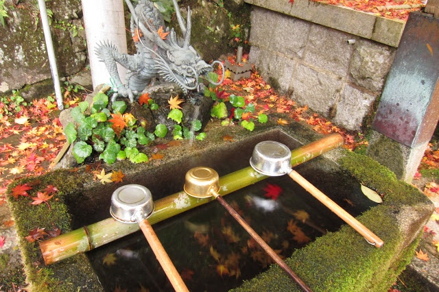 Round of the Seasons in Japan: Fallen Leaves
