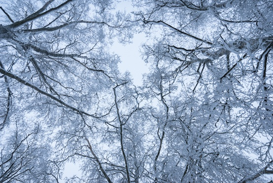 Trees in the wintertime #Finland #winter