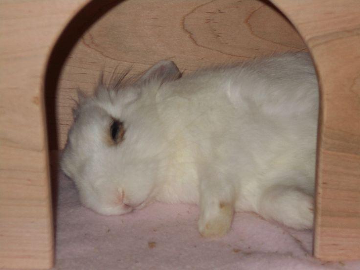 Luigi The Bunny takes a nap.