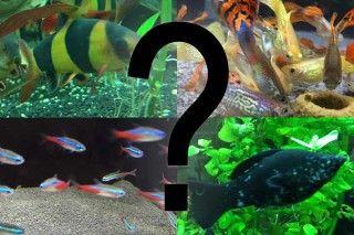 Aquarium Fische: Welche Arten gibt es und welche passen in einem Gesellschaftsbecken zusammen? Hier gebe ich dir eine Übersicht über die wichtigsten Arten.