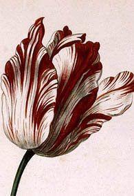 c5a8bb9535b01acbd99a2f2f62225e75--tulips