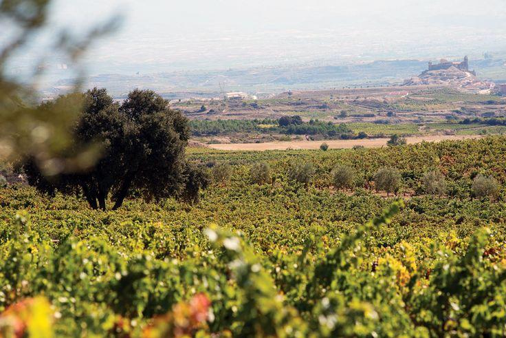 에브레 강 유역에 위치한 레멜유리(Remelluri)는 가장 오래된 포도원을 품고 있다. '프랑스식 포도주'의 전통을 보존하고 사라진 포도 품종을 복원하기 위해 노력하고 있어, 품격 있는 미각의 순례자들을 유혹한다. | Lexus i-Magazine 다운로드 ▶  www.lexus.co.kr/magazine #Lexus #Magazine #Rioja