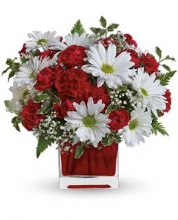 Beautiful Canada Day flowers! Use them in red and white painted jars for your backyard party this long weekend!
