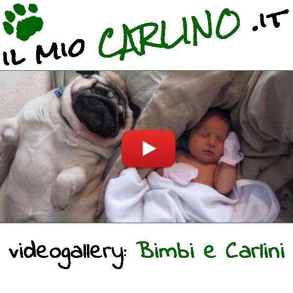 Meravigliosi filmati di Bimbi e Carlini!! #carlino #cani #bambini #bimbi #carlini