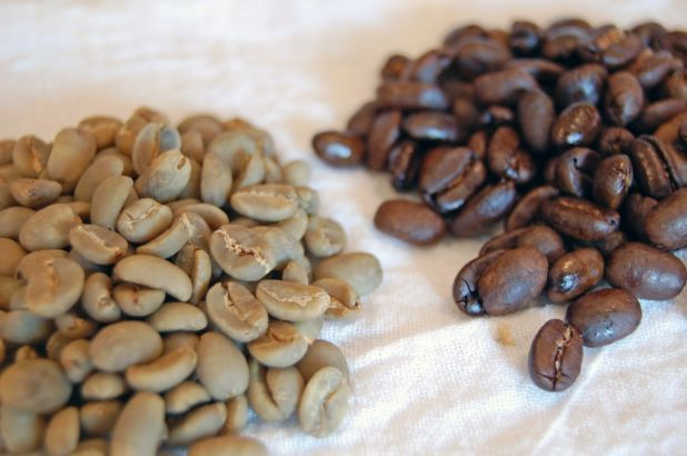 When roasted at 475 degrees, coffee beans are sometimes described as rich and full-bodied. But for the full-bodied person who is not so rich, unroasted coffee beans - green as the day they were picked - may hold the key to cheap and effective weight loss, new research suggests.