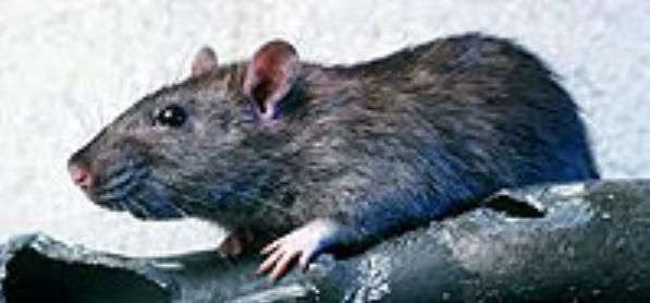 http://www.pestsolutions.co.uk/ Dont get trouble by mouse in your kitchen. Get the best pest solution by visiting the link given above.