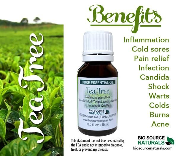 Tea Tree Essential Oil can be used for arthritis, cleaning, dandruff, ear infections, fir aid, insect repellant, foot care, rosacea, respiratory issues, scars and stretch marks, and viruses.  #aromatherapy