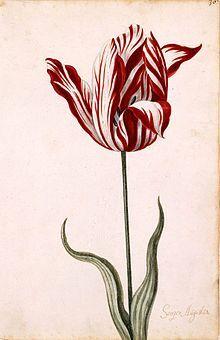 """Questo articolo su Wikipedia tratta del caso della """"bolla dei tulipani"""", dove il prezzo di questi ultimi salì vertiginosamente"""