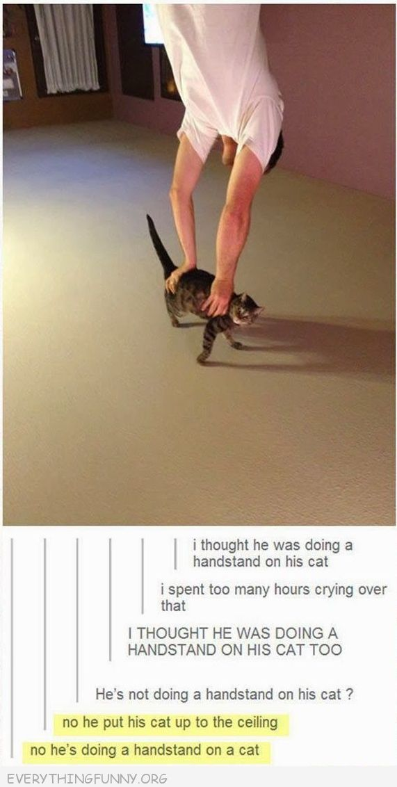 i was impressed that the cat had the strength to hold him up!..... then i read the comments
