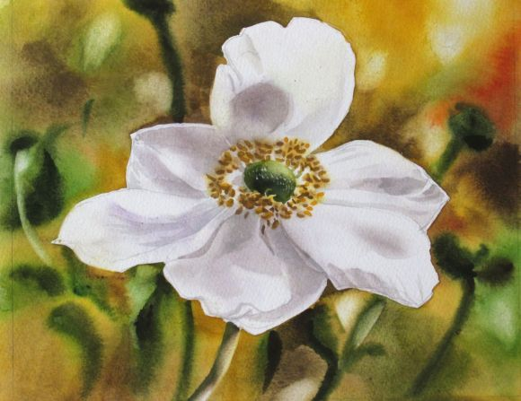 """A painting a day #10 """"Japanese anemone"""""""