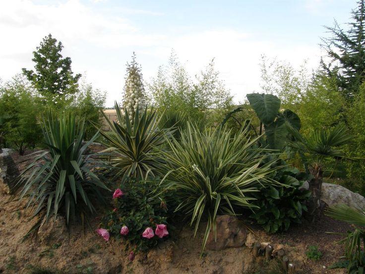 74 best Jardin exotique images on Pinterest   Landscaping, Safari ...