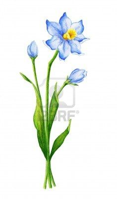 December birth flower (respect modesty faithfulness.)