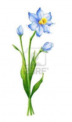 December birth flower (respect modesty faithfulness.)